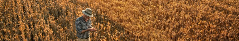 kwalifikowane-nasiona.jpg