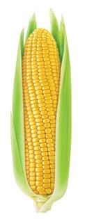 kukurydza-kolba.jpg