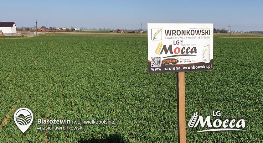 Pszenica-Mocca-01.jpg